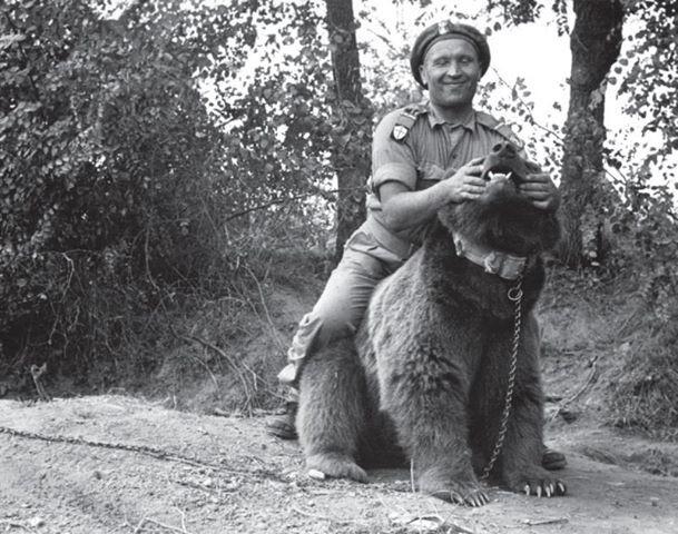 Медведь Войтек - капрал в армии генерала Андерса