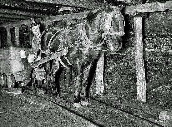 Пит Пони: Лошади в угольных шахтах