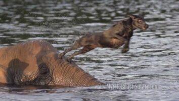 Слон-сирота и собака стали лучшими друзьями. Как такое может быть?