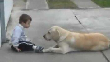 Солнечный ребёнок, собака и волшебная связь между ними