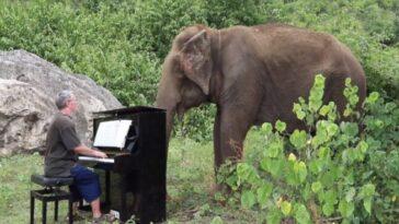 Замечательная музыкальная терапия для больных слонов в Таиланде