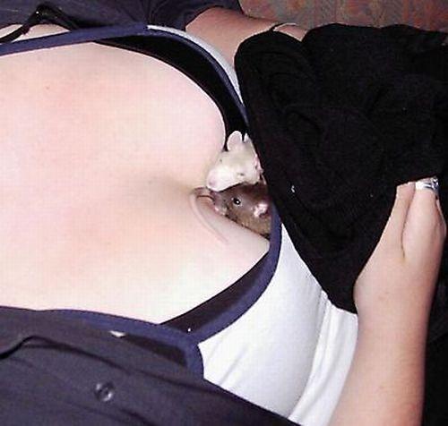 Что можно спрятать между грудей?(16 фото)