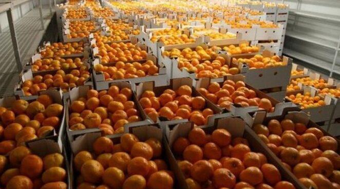 Бывший футболист Дарио Срна передал больницам 15 тонн мандаринов