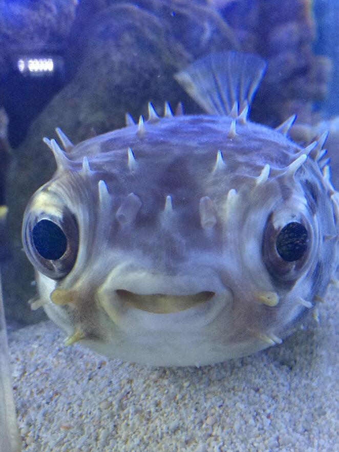 Эта рыбка передаёт тебе привет