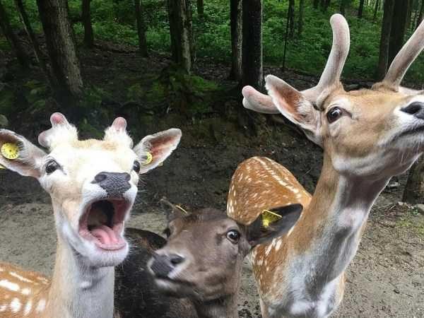Самые смешные и забавные животные (38 фото)