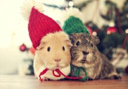 Немного хвостиков для новогоднего настроения