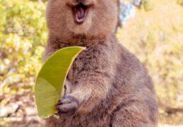 17 улыбающихся животных, которым не надо много для счастья. Мы должны брать с них пример!