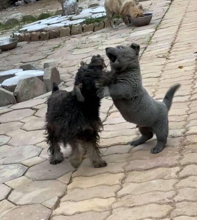 Котопёс? Говорят, этот щенок - смесь кошки и собаки!
