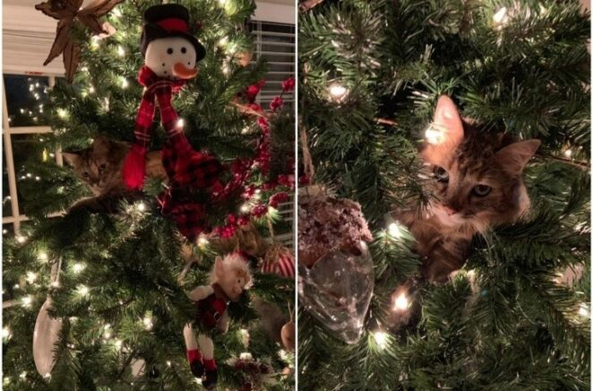 20 случаев, когда кто-то изменил настройки кошки!
