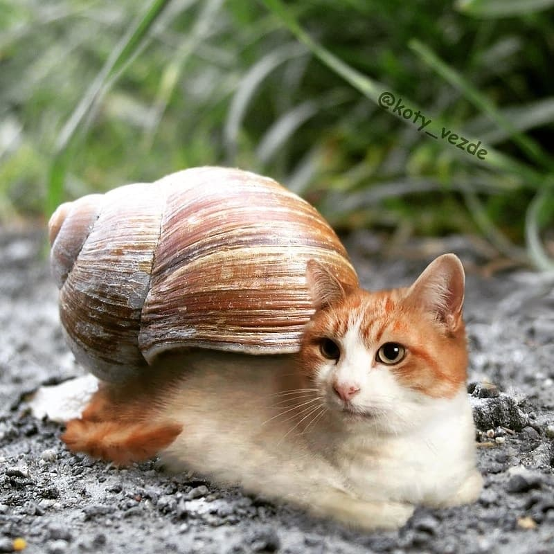 Как бы выглядели животные, будь у них кошачьи мордашки!