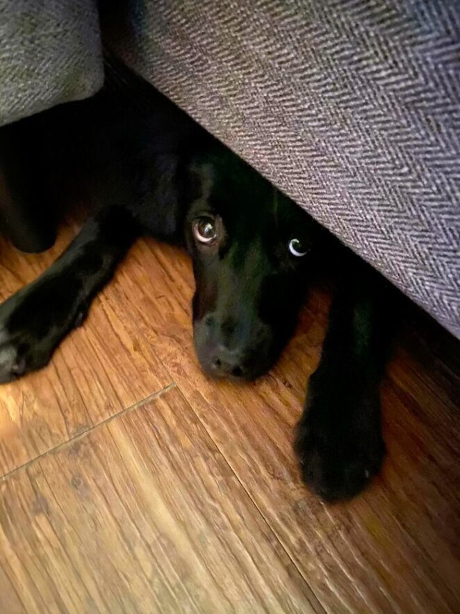 40 собак, которые суют нос в свои дела!
