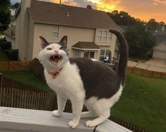 20 сердитых котов, с которыми не захочется связываться!