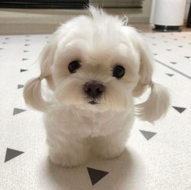14 фотографий щенков, которые наполнят ваше сердце любовью быстрее, чем вы сможете сказать «мимими»