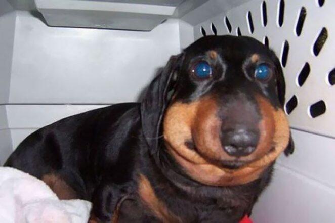 30 собак, которые больше не будут связываться с пчелами!