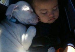 18 спящих животных, которые заставят вас в них влюбиться!