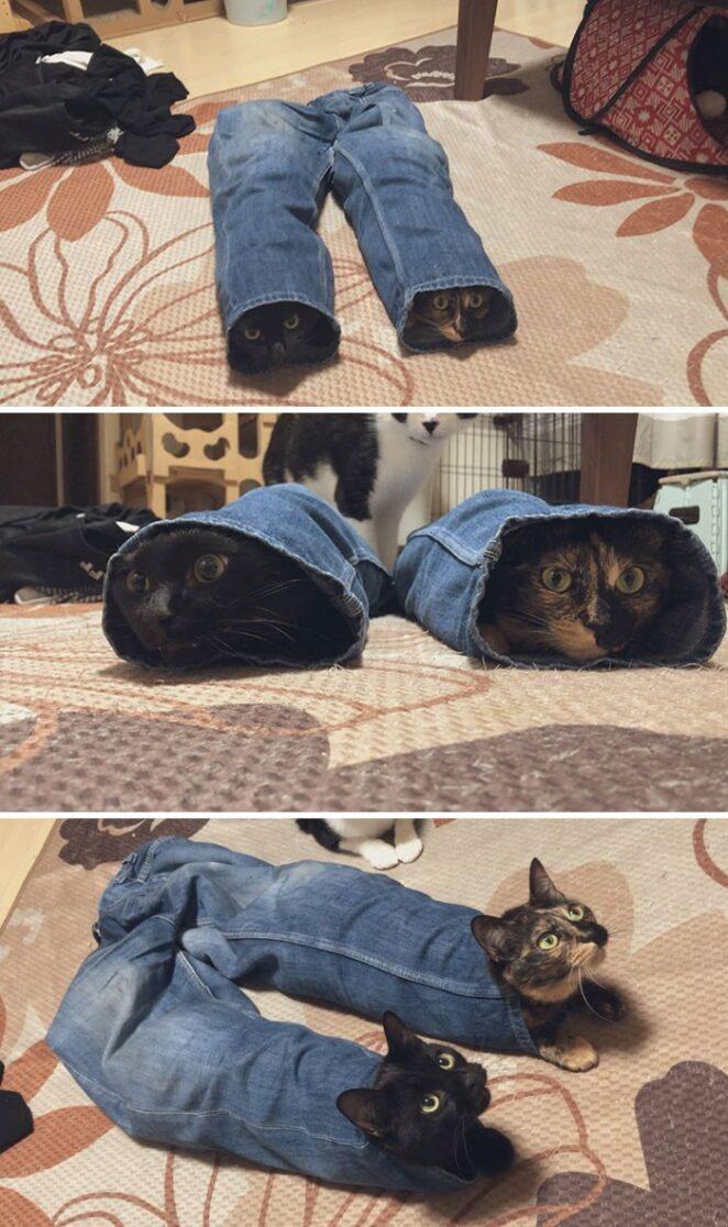 40 забавных фото котиков, которые вы должны увидеть прямо СЕЙЧАС!
