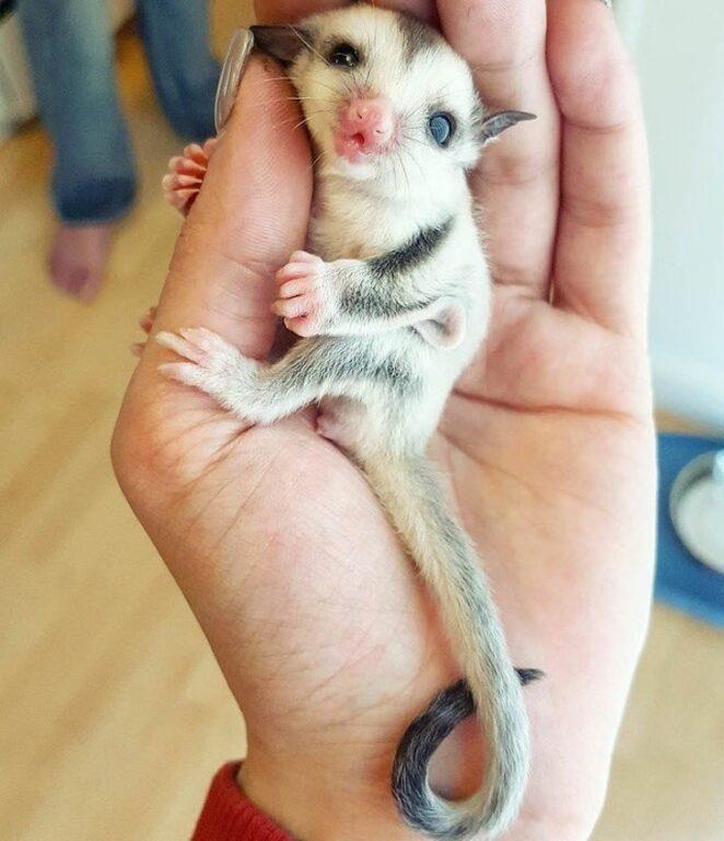 18 фотографий животных невероятных размеров!