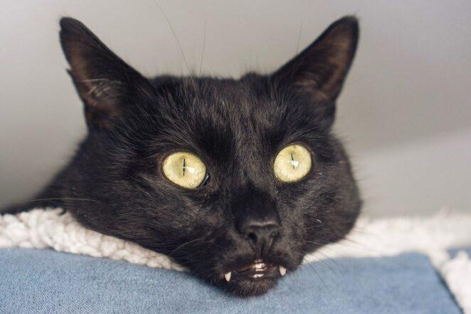 Милые маленькие зубки котиков - как ими не восхищаться?