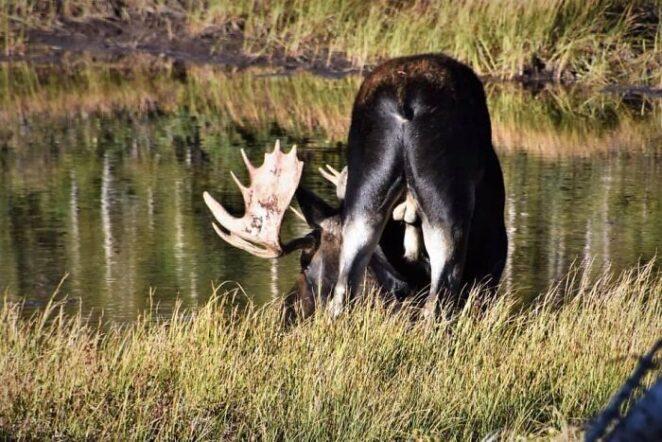 30 фотографий дикой природы, которые настолько плохи, что  хороши!