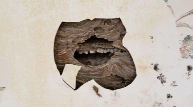 Парейдолия: вижу лица в неодушевленных предметах